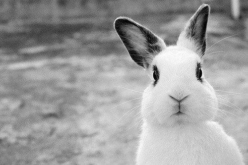 Кролик удивленно смотрит и думает: Почему ты еще не сделал клетку?