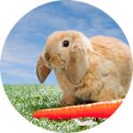 с морковью