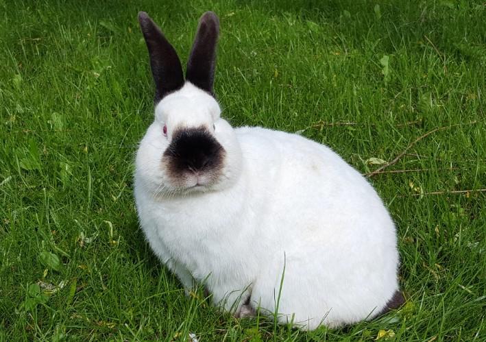 Братья крольчата сидят и смотрят на фотоаппарат