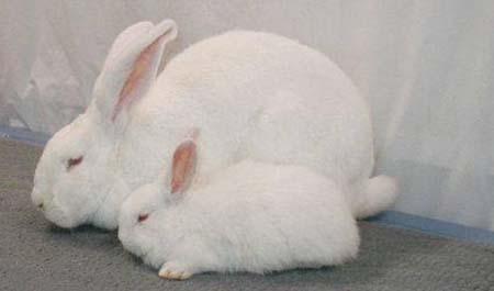 Крольчиха с кроликом