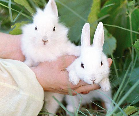Два мальчика зайчика
