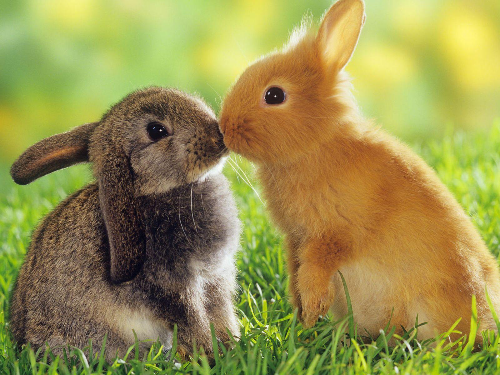 Фото целующихся