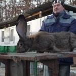 Фото разведение кроликов для начинающих