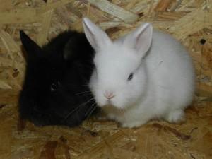 Фото кроликов с разным окрасом