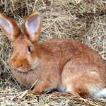 Фото кролик лежит на сене